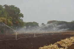 Origen Agroindustrial